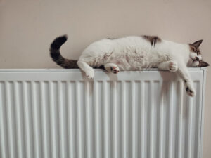 Cat Laying on Radiator After Radiator Installation and Radiator Service In Hampshire
